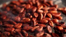 Cocoa Tostado