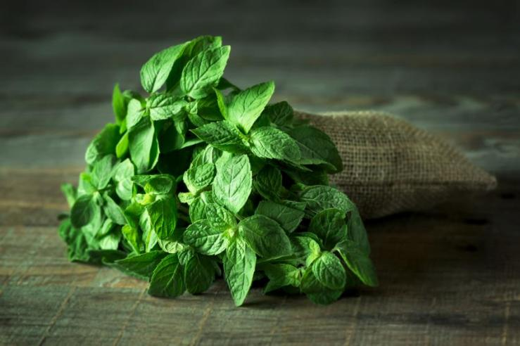 menta ingrediente