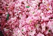 rosa eau de beaux