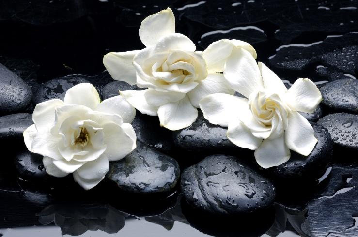 gardenia kim kardashian
