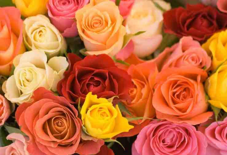 rosas eau de beaux